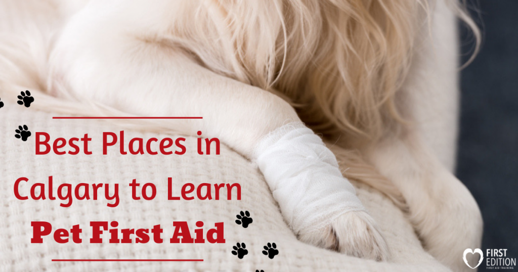 Pet First Aid Calgary Image
